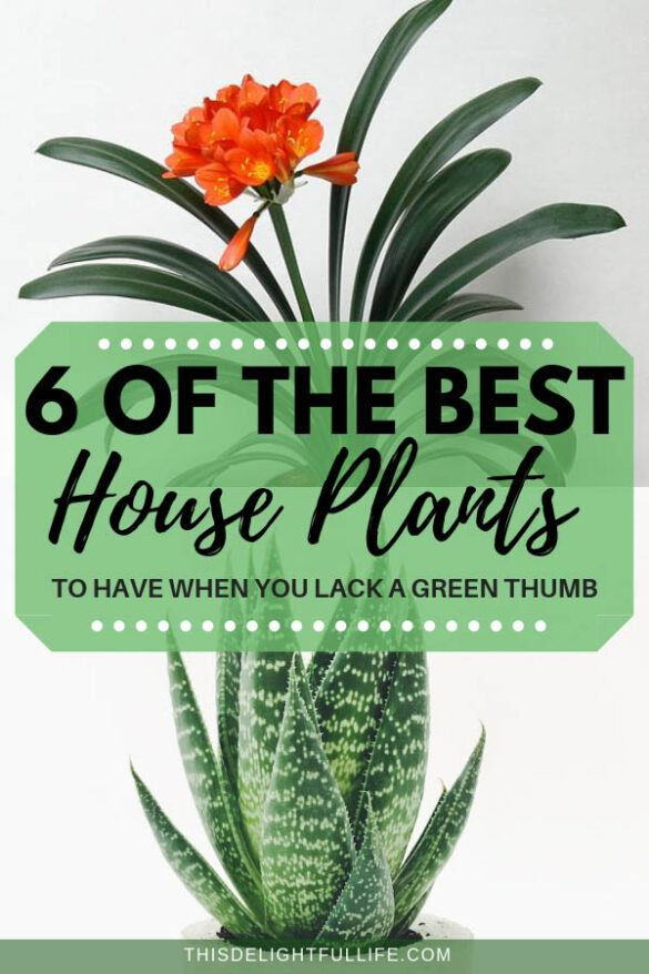 Best House Plants To Have When You Lack A Green Thumb - Lack a green thumb but are desperate to have some nice low maintenance indoor plants – you are not alone. These are the best house plants to have!